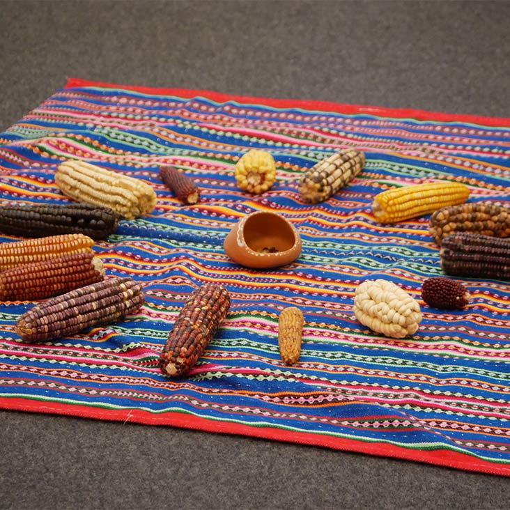 Sortenvielfalt von Mais bei Fortbildung SchülerUni Klimaschutz und Nachhaltigkeit